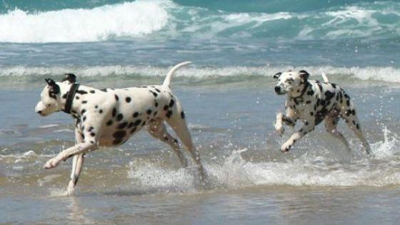 cani che giocano in spiaggiaa