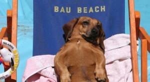 bau-beach