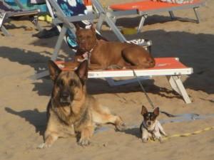 i cani si possono rilassare in spiaggia nei lettini
