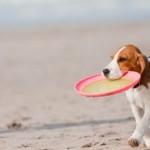 vista cane in spiaggia