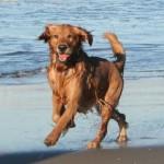 corsa del cane sulla riva della spiaggia
