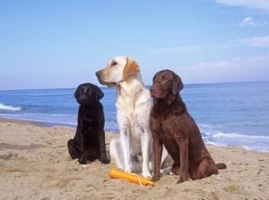 Cani in spiaggia a Genova